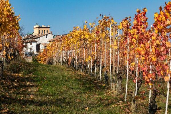cantine Monferrato
