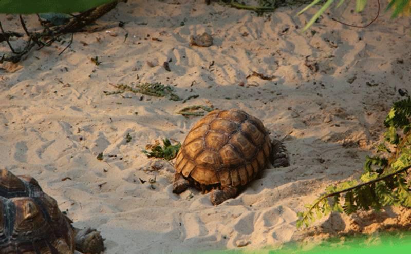 come costruire un terrario per tartarughe trovami