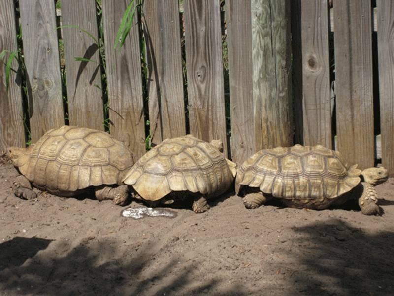 come costruire un terrario per tartarughe
