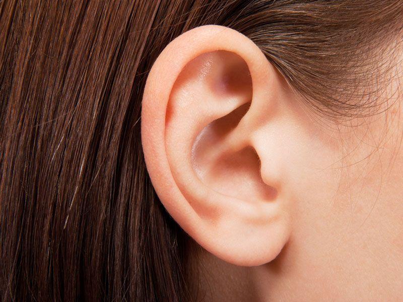 Come è composto l'orecchio
