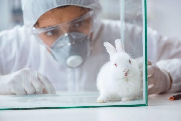 come riconoscere i prodotti non testati sugli animali