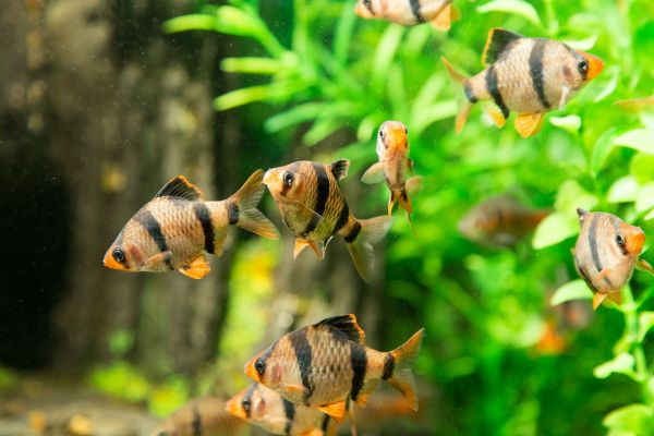 Come si riproducono i pesci