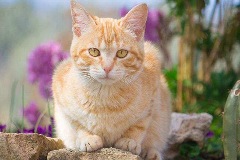 come togliere l'odore di pipì di gatto dal legno