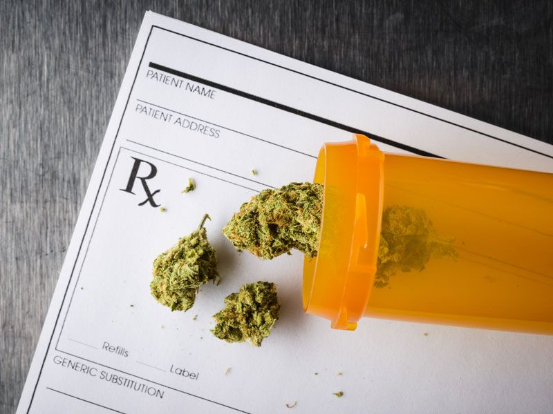Cosa è la cannabis