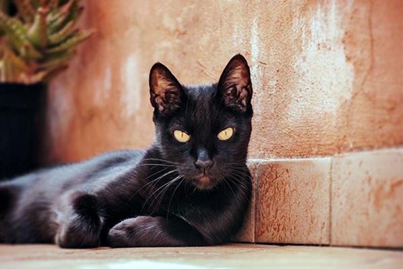 eliminare odore pipì gatto dal pavimento