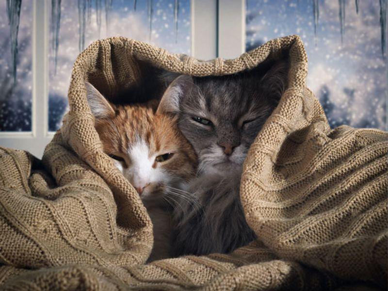 Fasi delle gestazioni dei gatti