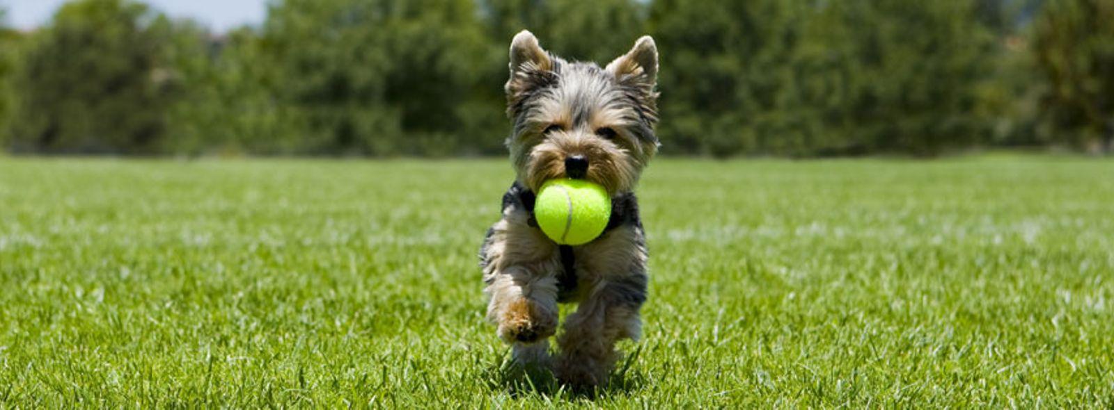 Quali sono i comandi per addestrare un cane