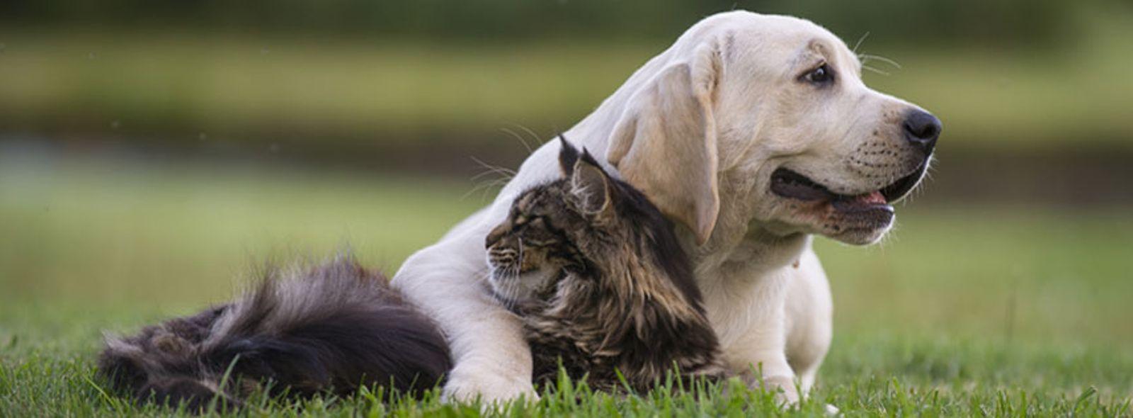Come adottare cani e gatti abbandonati