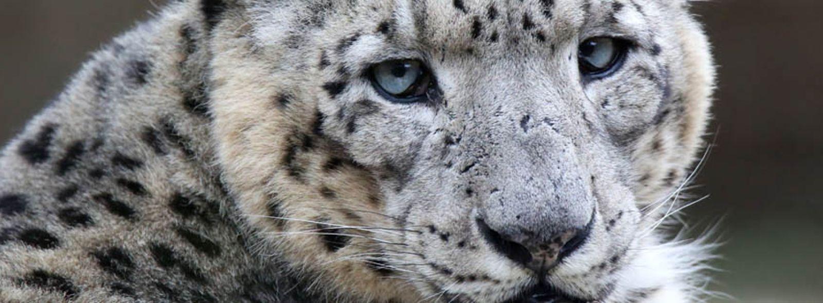 Quali sono gli animali più rari al mondo