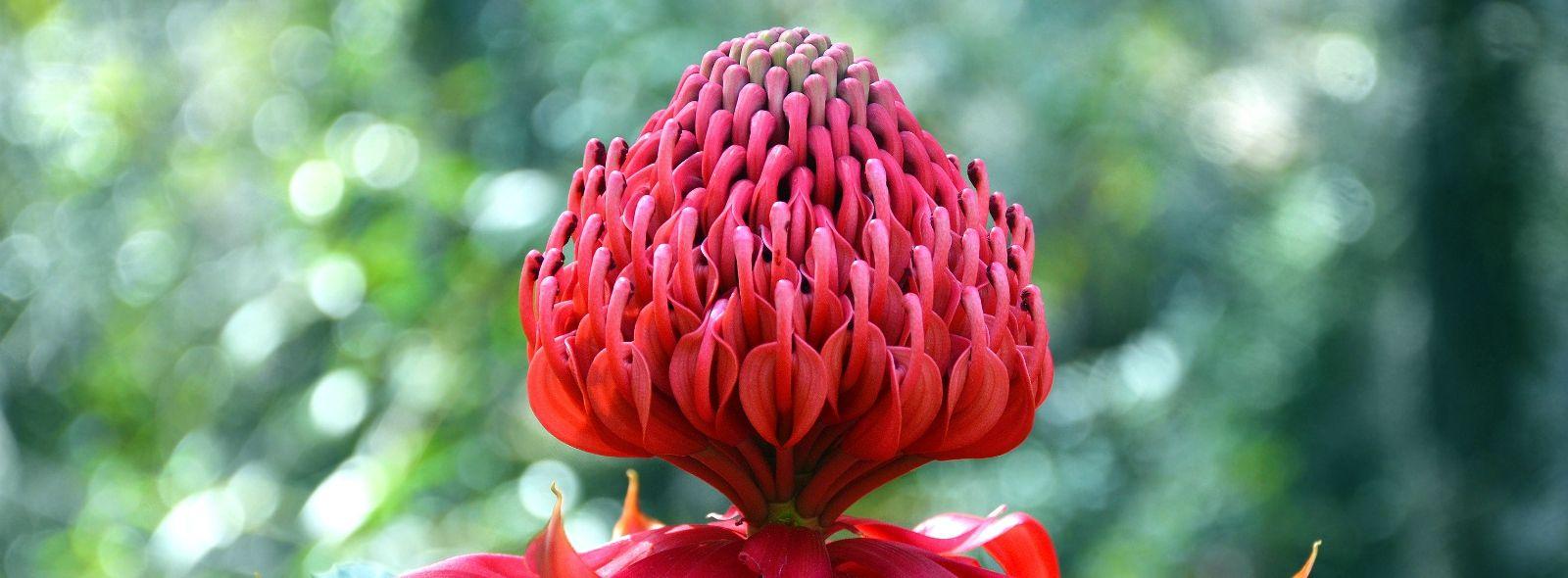 Elenco e benefici dei fiori australiani