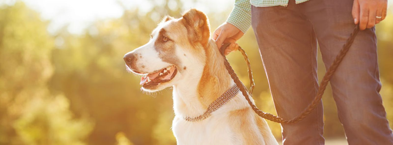 Per il cane è meglio il collare o la pettorina?