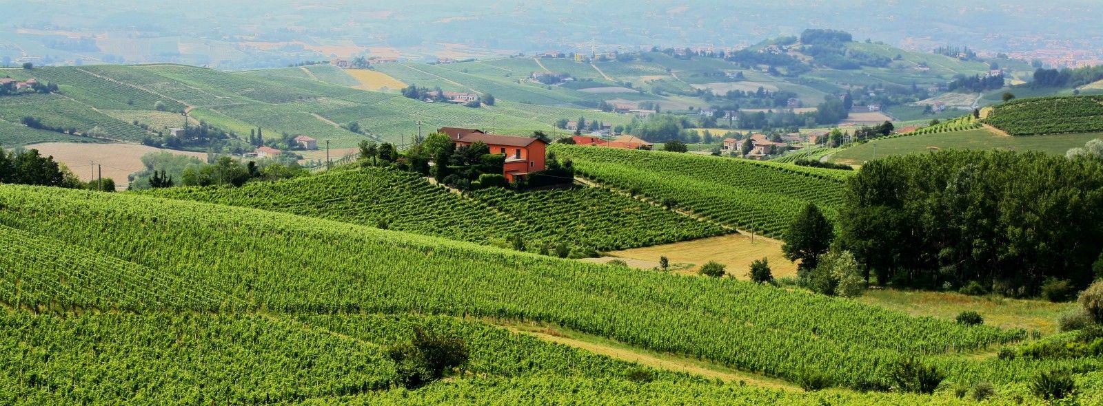 Tour nelle cantine Monferrato