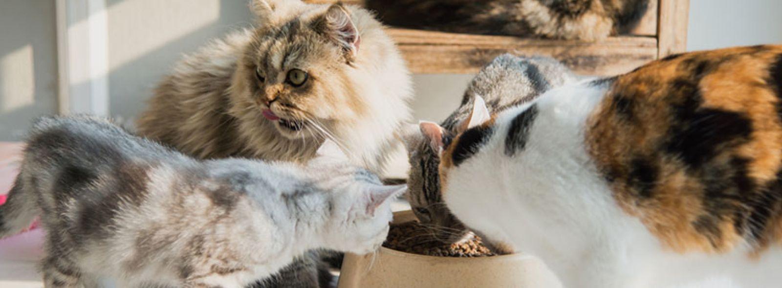 Quali cibi fanno male ai gatti
