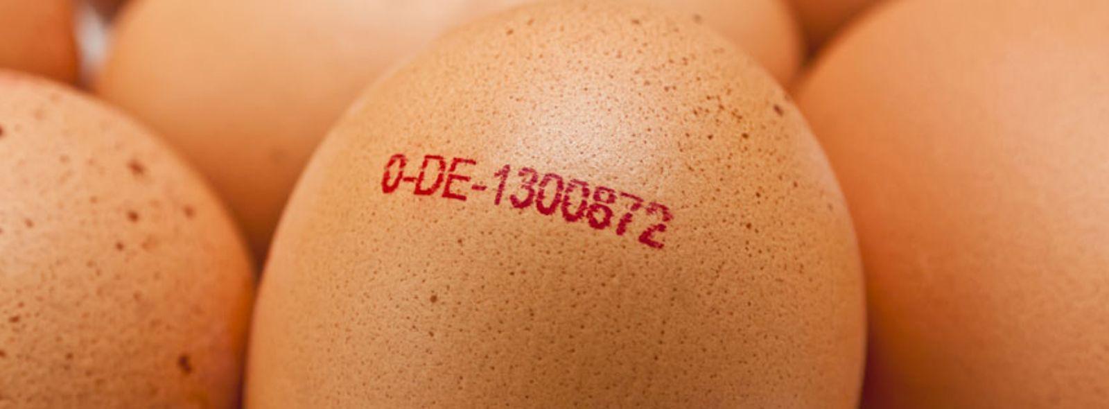 Come si legge il codice delle uova