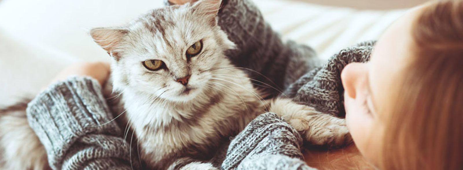 Che colore del pelo deve avere un gatto tranquillo