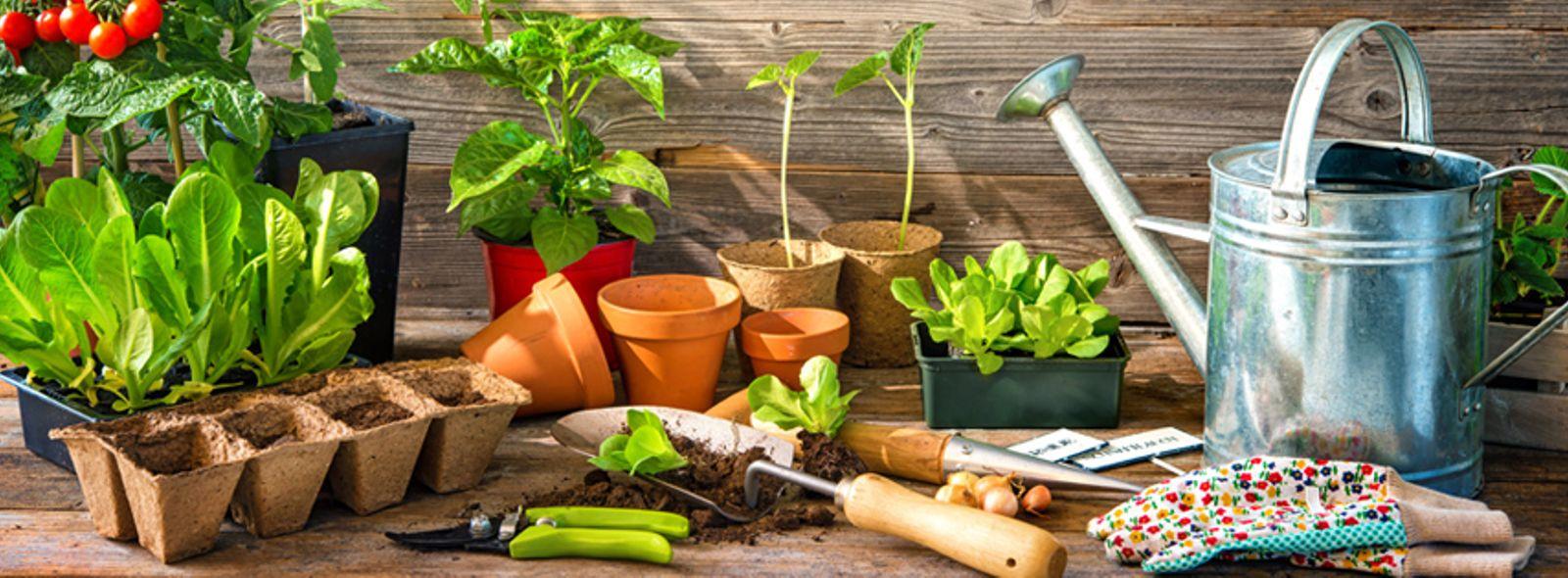 Come fare un orto in cassetta