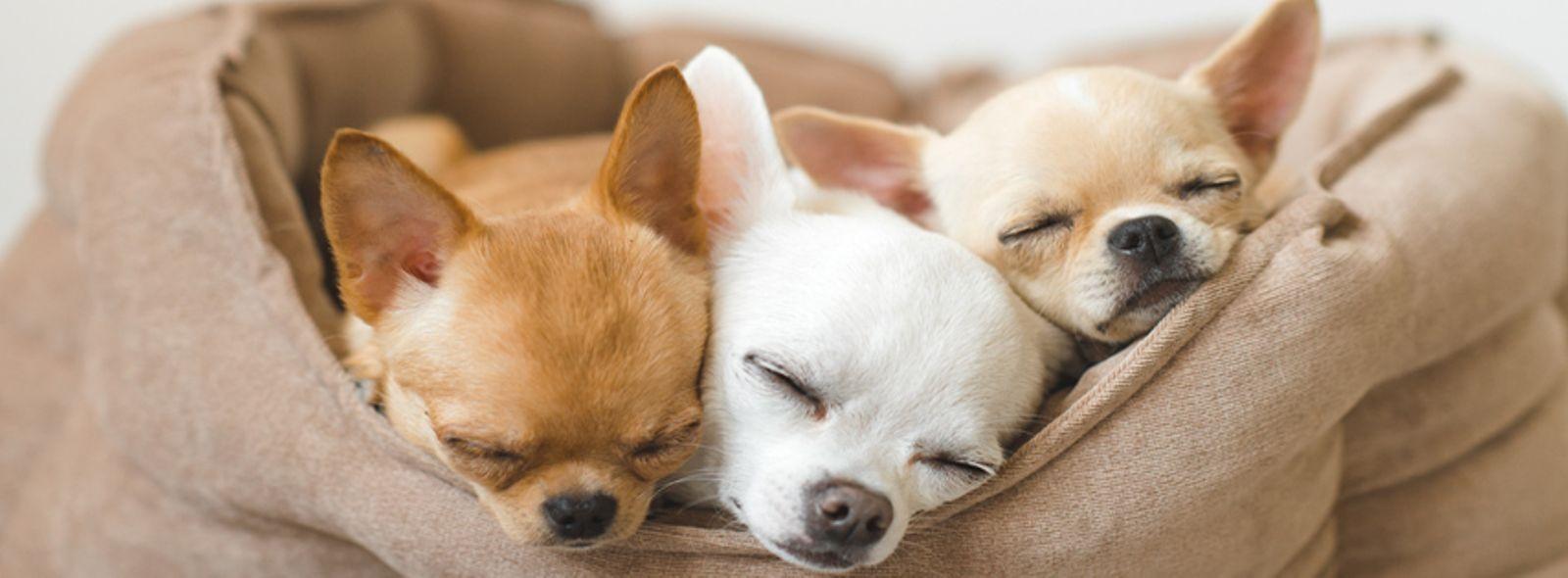 Cuccia per cani da interno fai da te - Cuccia per cani interno ...