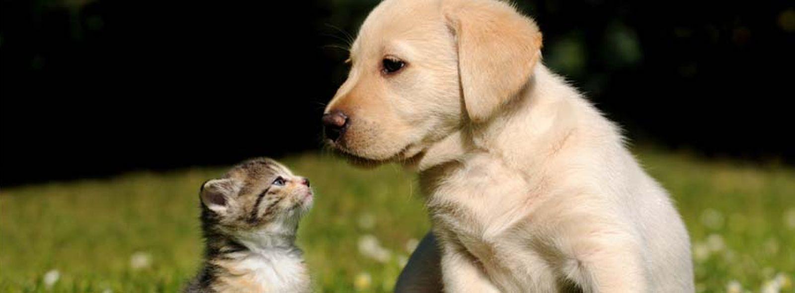 I gadget tecnologici per cani e gatti