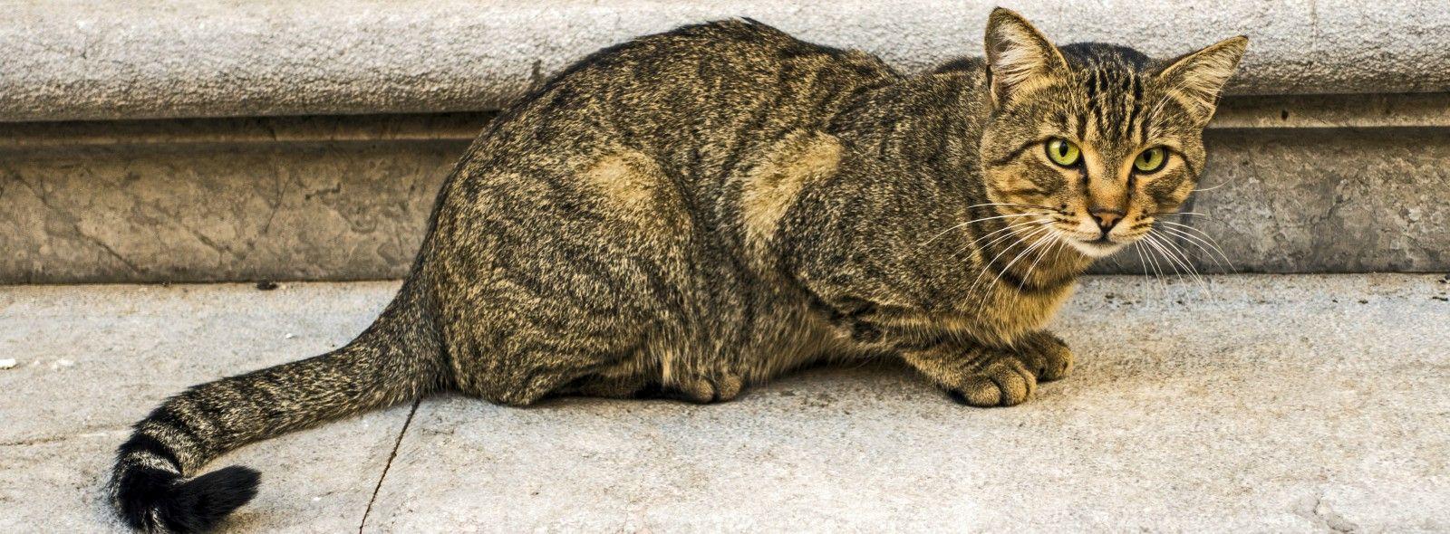 Dove portare i gatti abbandonati a Milano
