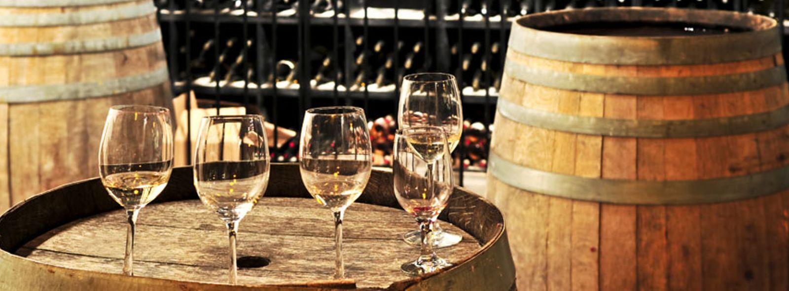 Itinerario degustazione vini novelli