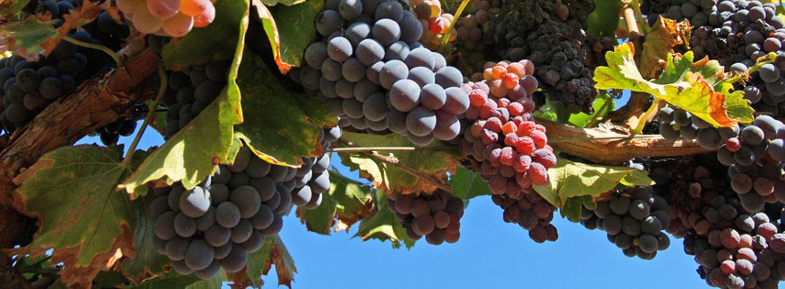 Itinerario degustazione vini Sardegna