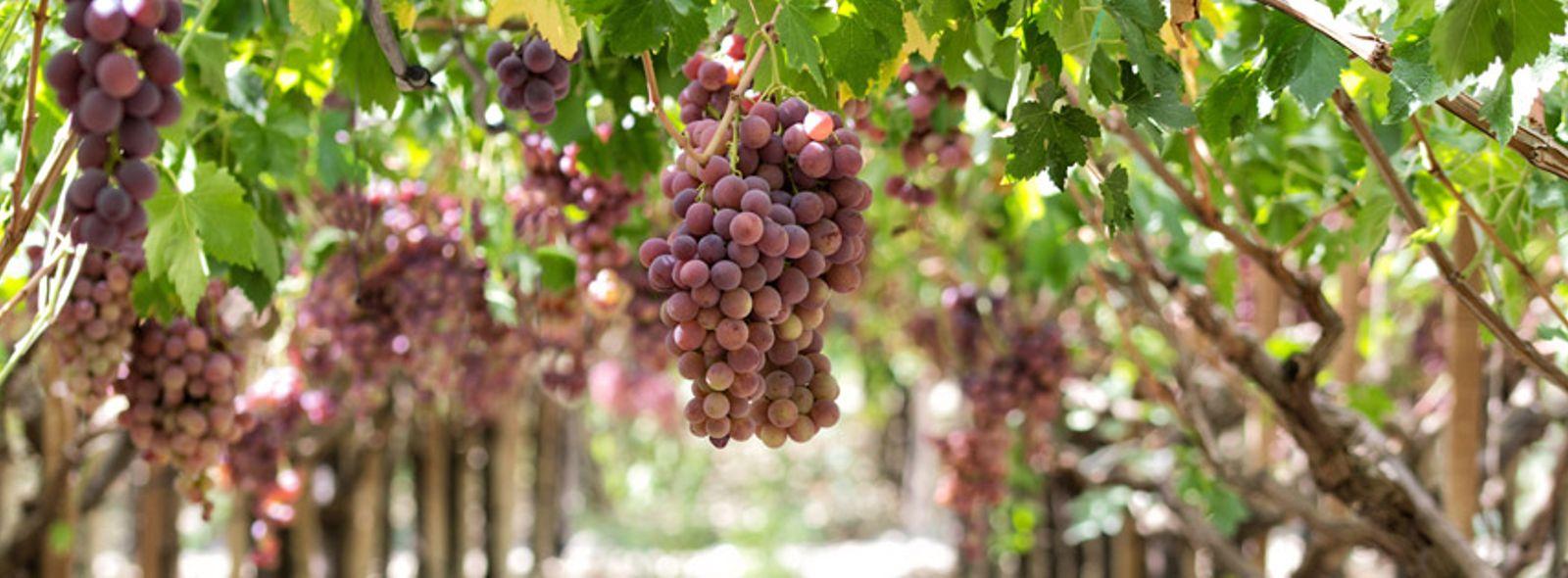 Itinerario degustazione vini Sicilia
