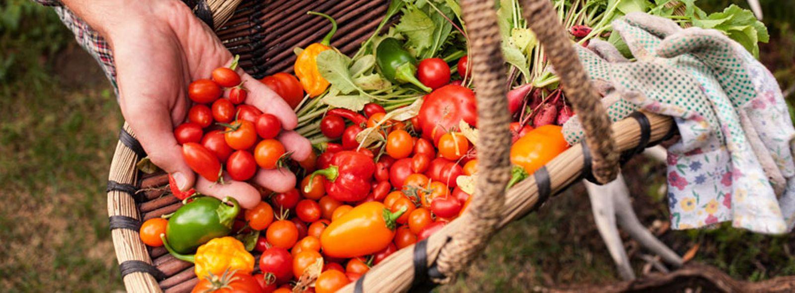 Come coltivare un orto in giardino