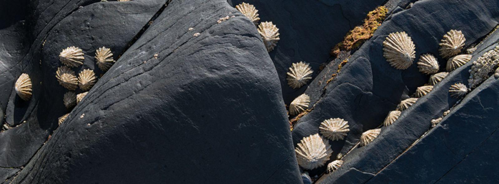 Patelle di mare
