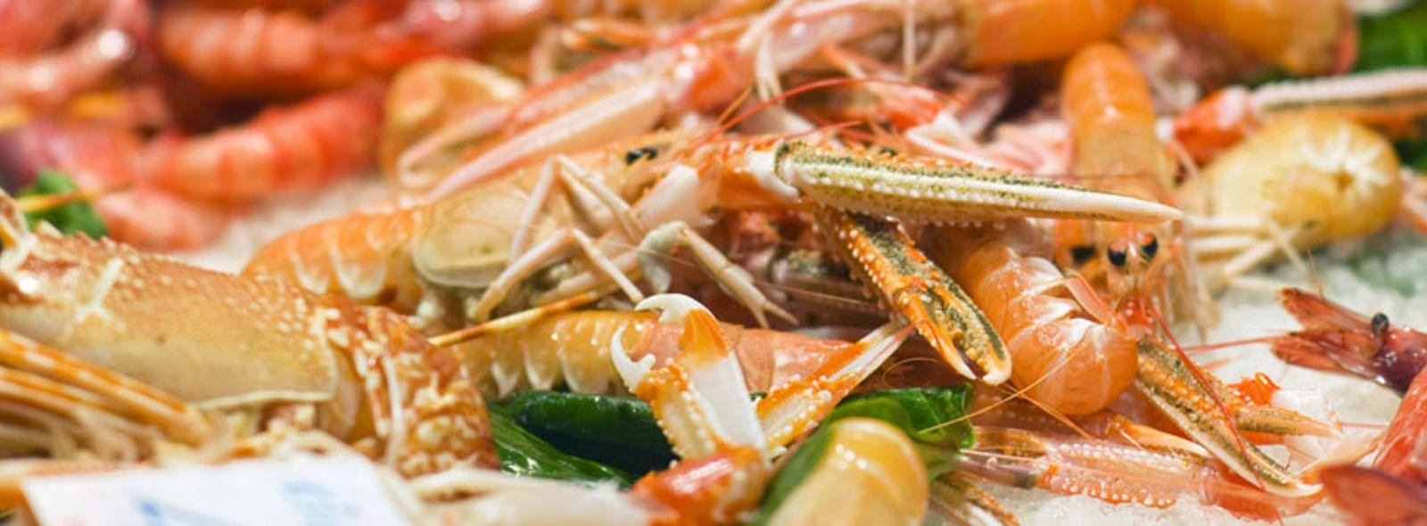 Dove comprare pesce fresco e molluschi a Milano?