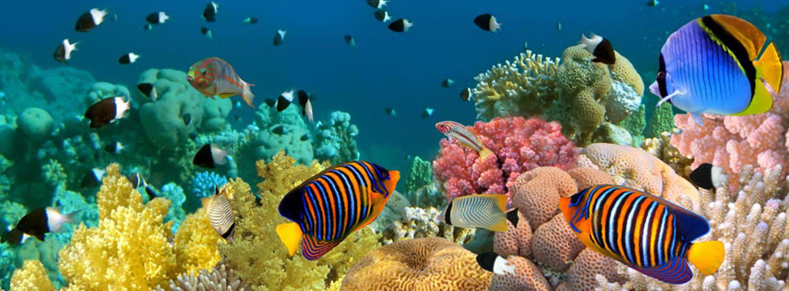 Pesci tropicali acquario trovami for Acquario per pesci