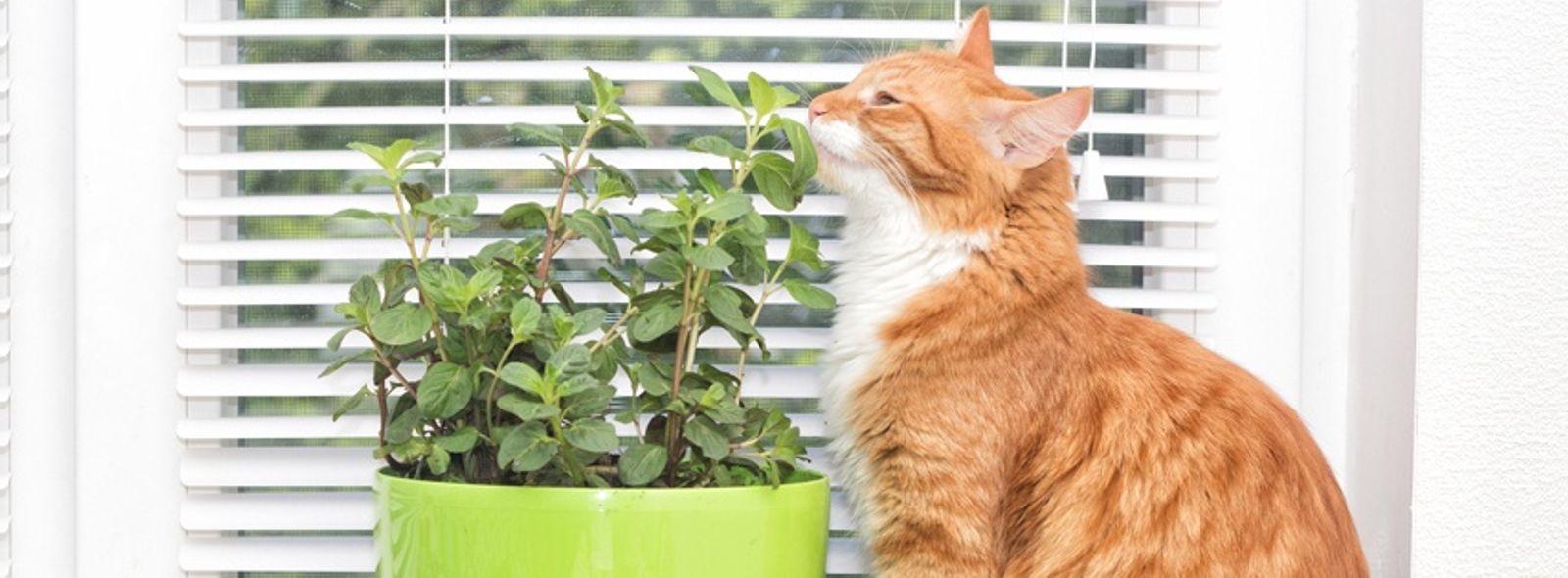 Come proteggere le piante dal gatto