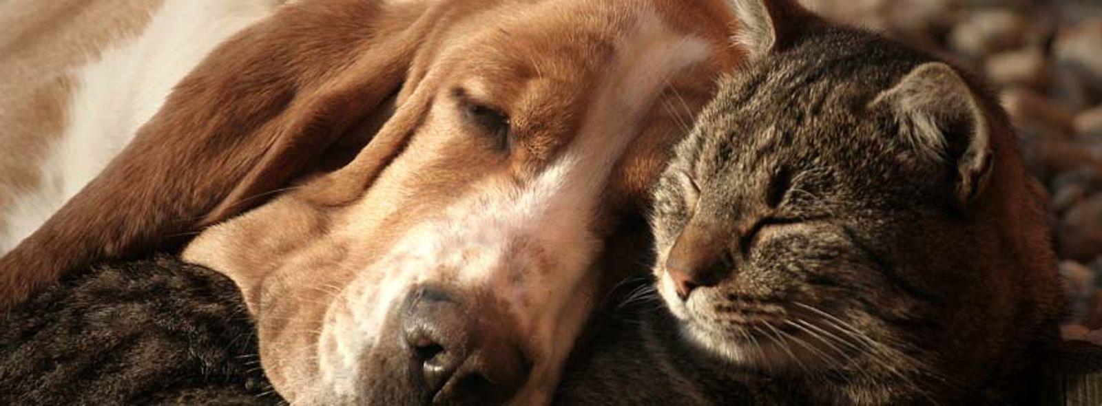 I vantaggi di sterilizzare il cane e il gatto
