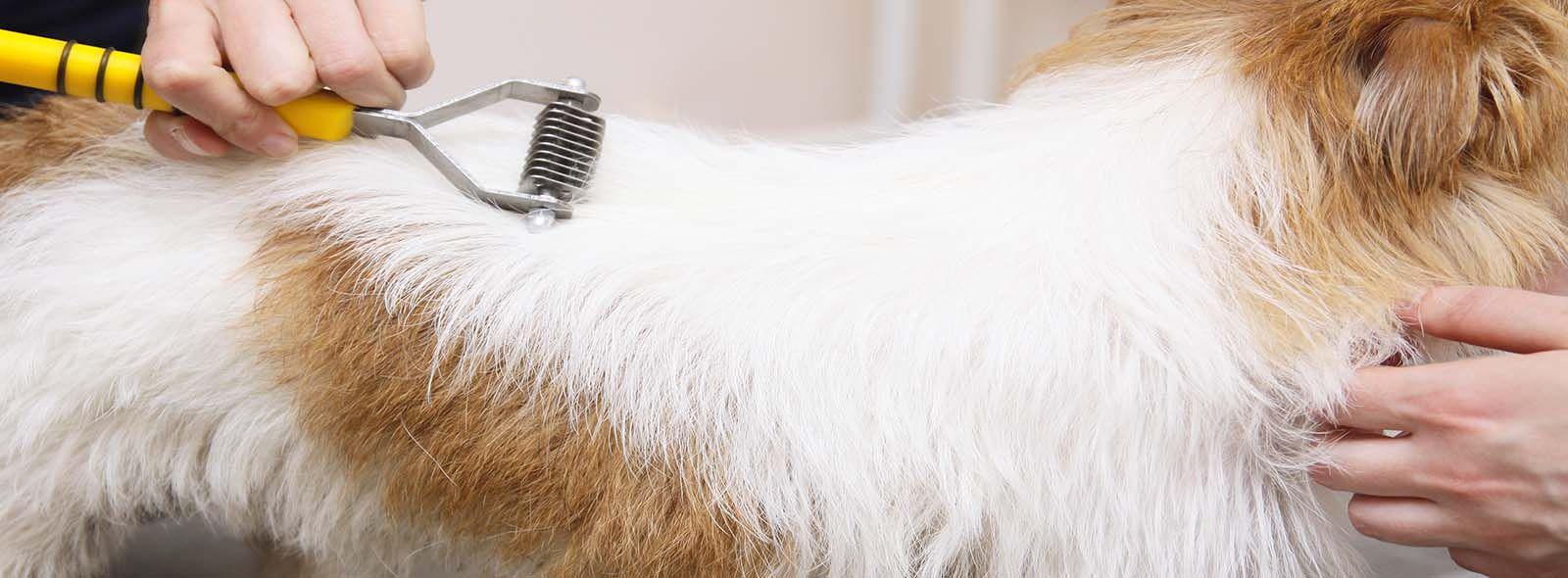 Stripping cani: cos'è?