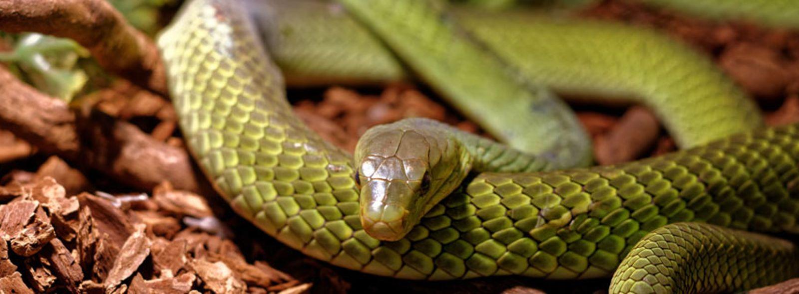 Come realizzare un terrario per serpenti