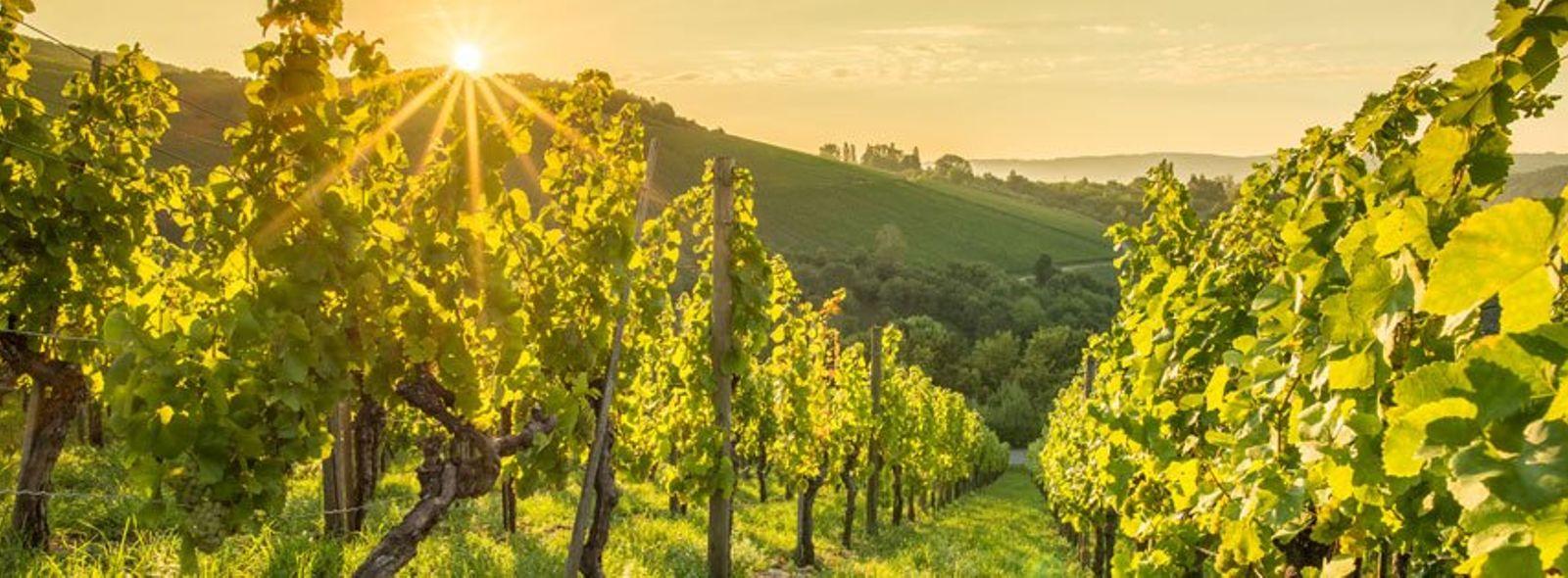 Dove comprare vino biologico?