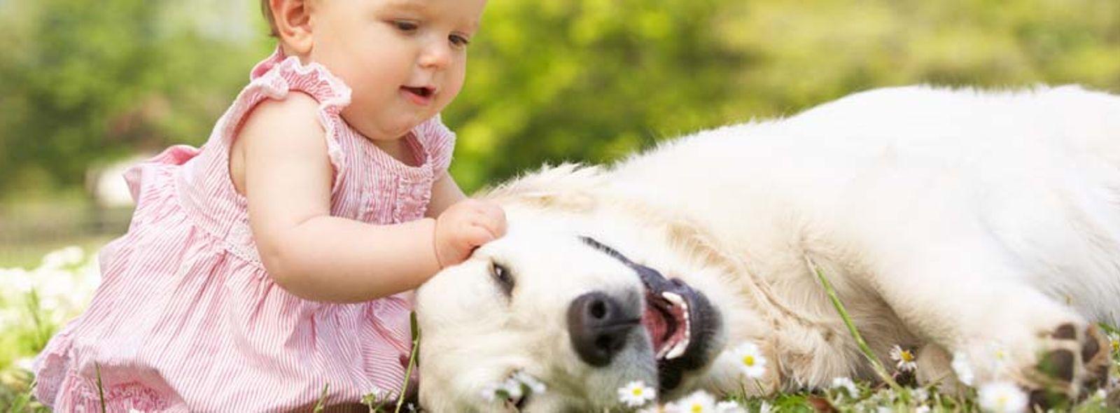 Come preparare il cane all'arrivo del neonato