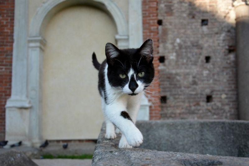 gatti abbandonati a Milano