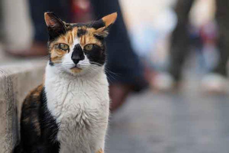 gatti abbandonati roma1
