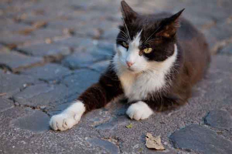 gatti abbandonati roma2