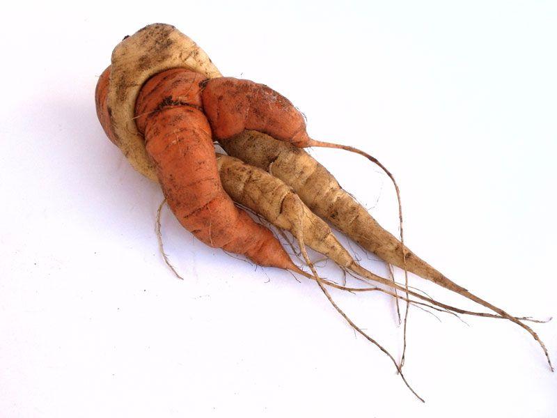 Il curioso caso delle carote