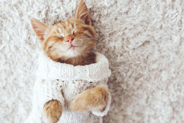 le malattie più pericolose per i gatti
