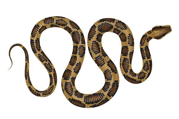 negozi vendita cibo serpenti