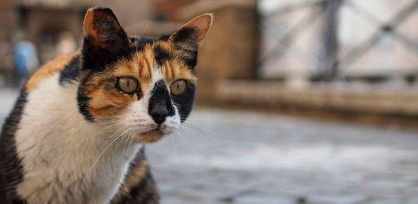 Dove portare i gatti abbandonati a Roma