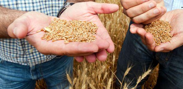 Quanto guadagna un agronomo