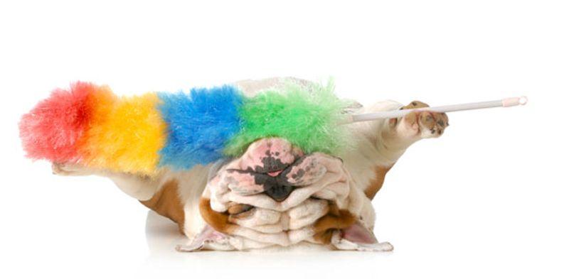 pulizia del bulldog inglese