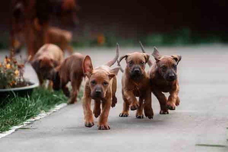 Sognare cuccioli di cane appena nati