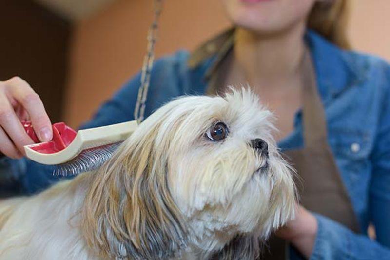 stripping cani tecnica