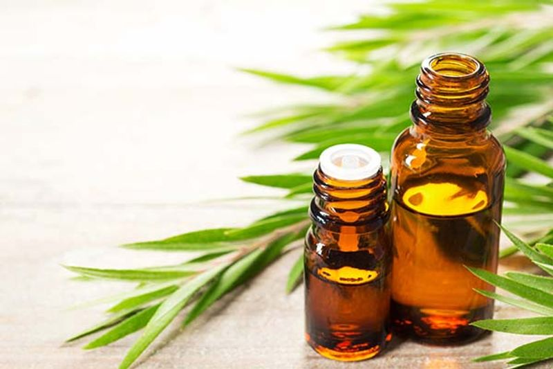 Tea Tree Oil proprietà