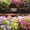 Fiori e piante da piantare in primavera