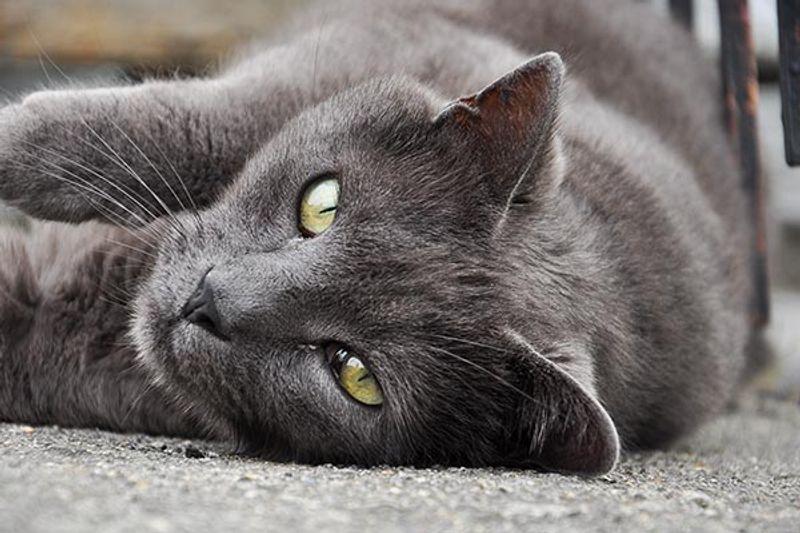 togliere odore pipi gatto materasso